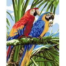 Festés számok szerint 40 x 50 cm Papagájok